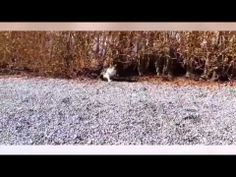 Funny Cats Compilation 2014,funny cats video,funny cats Compilation video,top funny cat videos water  http://www.youtube.com/watch?v=uZScNMErCOE