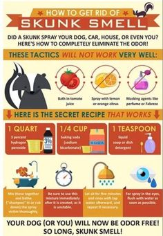 This is how to get rid of skunk smell from you and your dog or other pet that was unfortunately sprayed by the disgusting smelling pee of a skunk Skunk Smell Remover, Odor Remover, Skunk Removal, Skunk Smell In House, Dog Sprayed By Skunk, Dog Skunk, Getting Rid Of Skunks, Citrus Perfume, Dog Smells
