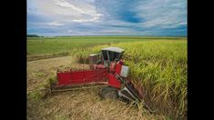 Cutting Sugarcane for 2017 Harvest in Louisiana HD