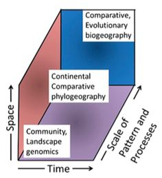 Comparative phylogeography occupies an intermediate position between landscape-level investigations and evolutionary biogeographic studies at higher taxonomic levels. (Figure 7 from Riddle (2016)).