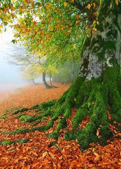 Autumn tree with moss