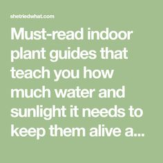 Must-read indoor plant guides that teach you how much water and sunlight it needs to keep them alive and make sure they are non-toxic to your pets!