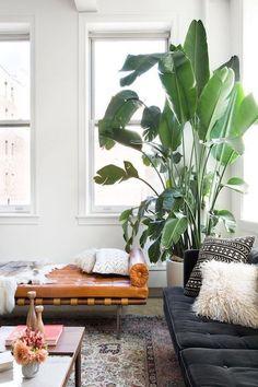 Wohnen mit #Pflanzen
