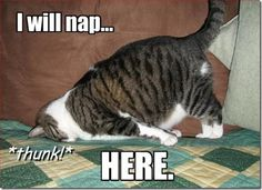 I feel like this too! 30 Funny animal captions - part funny memes, funny animal memes, animal pictures with captions Animal Captions, Funny Animals With Captions, Funny Animal Memes, Funny Animal Pictures, Cute Funny Animals, Cat Memes, Funny Cute, Funny Images, Cute Cats
