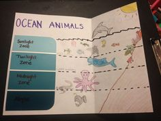 ocean zones - Google Search