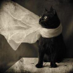 Gato Negro Kuroneko