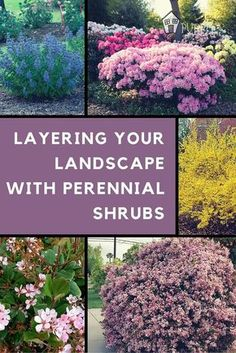 Garden Planning - Deciduous perennial shrubs add a pop of color to your garden or landscape. Plant blooming perennial shrubs in front of evergreens for maximum pop Perennial Garden Plans, Garden Shrubs, Lawn And Garden, Bushes And Shrubs, Perennial Gardens, Perennial Bushes, Shade Shrubs, Shade Flowers Perennial, Perrenial Flowers
