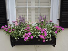 pink and lavender window box sun black wood container