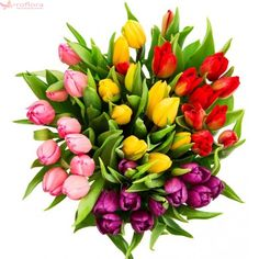 Bouquet of fresh multicolor tulips isolated on white background. Top view See more nature objects isolated on white background in my collection Tulips Flowers, Spring Flowers, My Flower, Flower Power, Share Pictures, Animated Gifs, Tulip Bouquet, White Background Images, White Stock Image