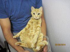 Animal Hospital At Tatum Ranch - 17 year old man :)