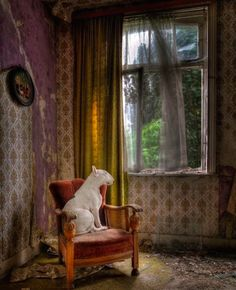 Alice van Kempen creates some of the most eye-catching canine-themed photos you'll ever see. The picsstar her Bull Terrier, Claire, and…