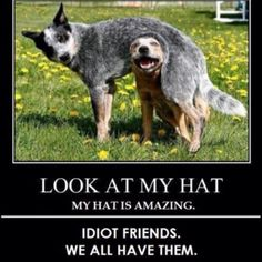 @Brooke Collins.. brooke you will think this hilarious! @Molly Dufficy these look like your muts w tails!