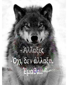 Silver Fire and Magic Heart Wolf Pack Quotes, Wolf Quotes, Animal Quotes, Me Quotes, Motivational Quotes, Inspirational Quotes, Quote Of The Day, Native American Quotes, Wolf Love