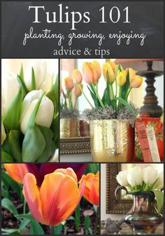 Tulips 101 advice, tips on planting, growing and enjoying http://mysoulfulhome.com