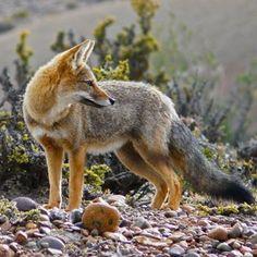 Love foxes? Check out FoxFanWorld Com! 💖    Caption the picture! :)  #FoxFanWorld    #Foxes #Foxlove #Foxlovers  #FoxFanWorld    #Foxes #Foxlove #Foxlovers