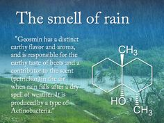 The smell of rain: Geosmin
