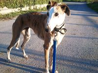 A sanctuary for the galgos Rest Area, Dog Travel, Travel Companies, His Eyes, Fundraising, Charity, Abandoned, Clever, Spanish