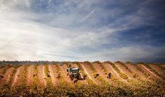 ¿Por qué hay tantas variedades de vino? https://www.vinetur.com/2014071616174/por-que-hay-tantas-variedades-de-vino.html