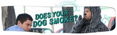 Does your dog smoke?? Warning signs http://www.fxcanada.ca/wp-content/uploads/2013/06/wilfred_mydogsmokes_header.png