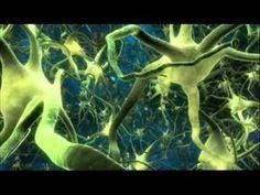 ¿Cómo funcionan las neuronas, el aprendizaje y los estados de ánimo en el cerebro?