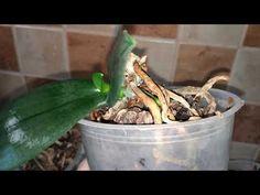 Детка орхидеи на пеньке. часть 5. - YouTube