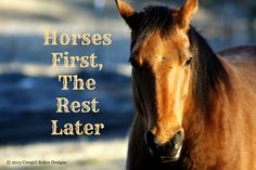 TRUTH of the day!! ...Find the PERFECT horse for you at http://pahorsemall.com/!