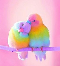 Rainbow aesthetic pretty animals, pretty birds, pretty in pink, cute chibi, love Cute Birds, Pretty Birds, Beautiful Birds, Animals Beautiful, Pretty Animals, Birds Pics, Animals Amazing, Baby Animals Pictures, Animals And Pets