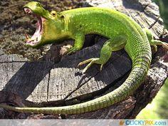 Freaky Photoshopped Animal Hybrids