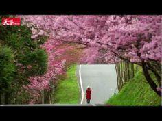 Discover the beauty of Taiwan in 4 seasons《發現美麗台灣之春夏秋冬》