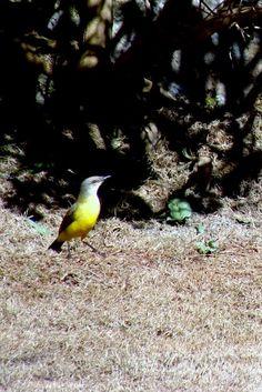 Pássaro Foto de Brígida BiChika