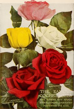 """Image from page 23 of """"Dingee guide to rose culture : 1850 1912"""" (1912)   Flickr - Photo Sharing!"""
