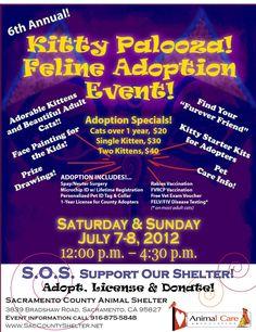 Kitty Palooza at Sacramento County Shelter July 7th - 8th 12pm-4:30pm