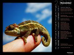 Finger Chameleon (MorgueFiles)