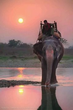 Elephant ride in India, or Thailand. Or anywhere as long as there is an elephant. Oh The Places You'll Go, Places To Travel, Places To Visit, Beautiful World, Beautiful Places, Beautiful Sunset, Simply Beautiful, Pink Elephant, Elephant India