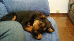 Taking a nap♡