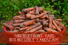 Turn your front yard into an edible landscape