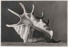 Corona Gianluca   Skorpion. Pencil on Schoeller cardboard