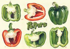 Christina McLean - bell pepper drawings