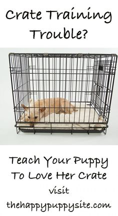 dog obedience training Your Ultimate Expert Guide To Crate Training A Puppy - The Best Online Expert Guide To Crate Training A Puppy. Giving you all of the information you need on choosing and using the best puppy crate. Puppy Training Tips, Training Your Dog, Kennel Training A Puppy, Dog Crate Training, Training Schedule, Training Classes, Puppy Kennel, Training Pads, Leash Training