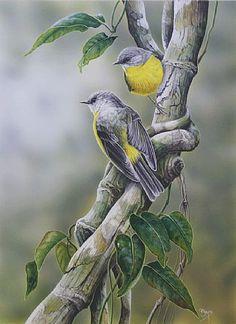 PetaBoyce - BIRDS Something Wild, Australian Birds, Aesthetic Painting, Bird Pictures, Wildlife Art, Bird Prints, Bird Art, Natural History, Beautiful Birds