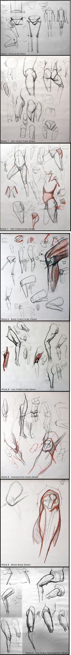 Pelvis & hip structure / Leg & knee - analyticalfiguresp08.blogspot - Kevin Chen #analytical #drawing #figureDrawing #instructorDemo #structure