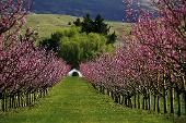 Neuseeland im Frühling