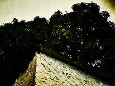 "528 - ""Meia Água"" #umafotopordia #picoftheday #brasil #brazil #n8 #snapseed #pixlromatic+"