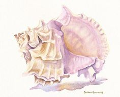 Murex Seashell Beach Art Print Watercolor Painting of Original, Barbara Rosenzweig,