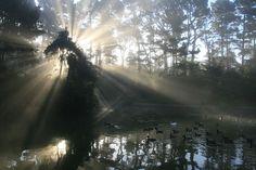 Crepuscular rays, taken at Lloyd Lake in Golden Gate Park, San Francisco, California (photo by Brocken Inaglory)