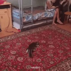 Goalkeeper - your daily dose of funny cats - cute kittens - pet memes - pets in clothes - kitty breeds - sweet animal pictures - perfect photos for cat moms Funny Animal Videos, Cute Funny Animals, Cute Baby Animals, Cute Cats, Funny Cats, Videos Funny, Viral Videos, I Love Cats, Crazy Cats