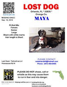 Lost Dog - Mix - Orlando, FL, United States
