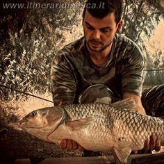 Mais popup come esca per questa carpa mitica al lago la Barcaccia pesca fishing