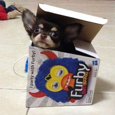 Pup Accidentally Returned to Toy Store Chi Chi, a...