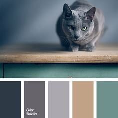The skin color of Russian blue cat is abundant with the shades of gray, ranging from blue to pink. And combination of gray and acid green will fit perfectl.